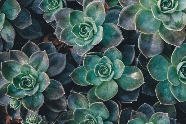 Pflanze Bild